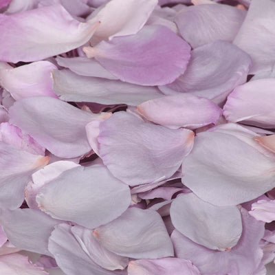 Lilac Purple Rose Petals