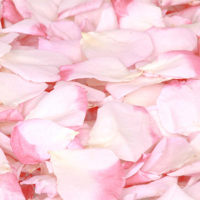 Strawberry pink rose petals