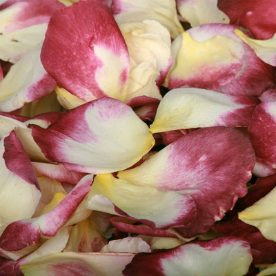 Burgundy and Ivory Rose Petals