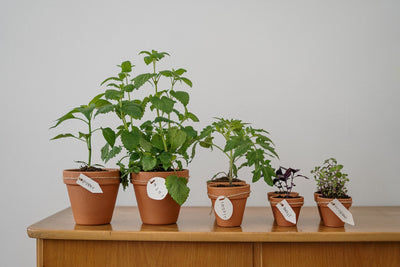 Vegetables You Can Plant In An Apartment