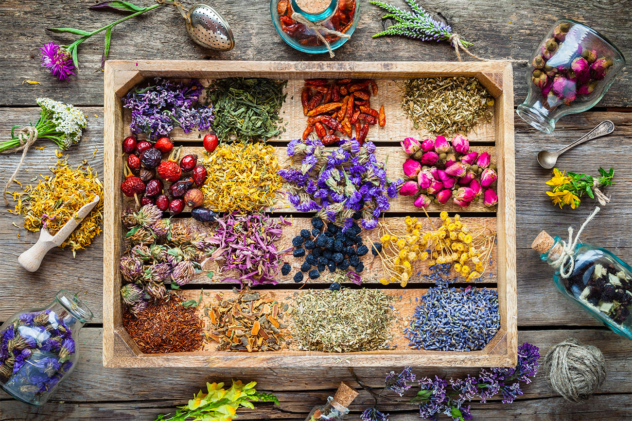 Different flowers and plants arranged on a table ready for the extraction of essential oils.