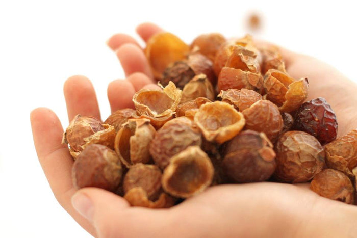 What are Soapberries Or Soap Nuts? The Ultimate Guide To Soap Berries Australia