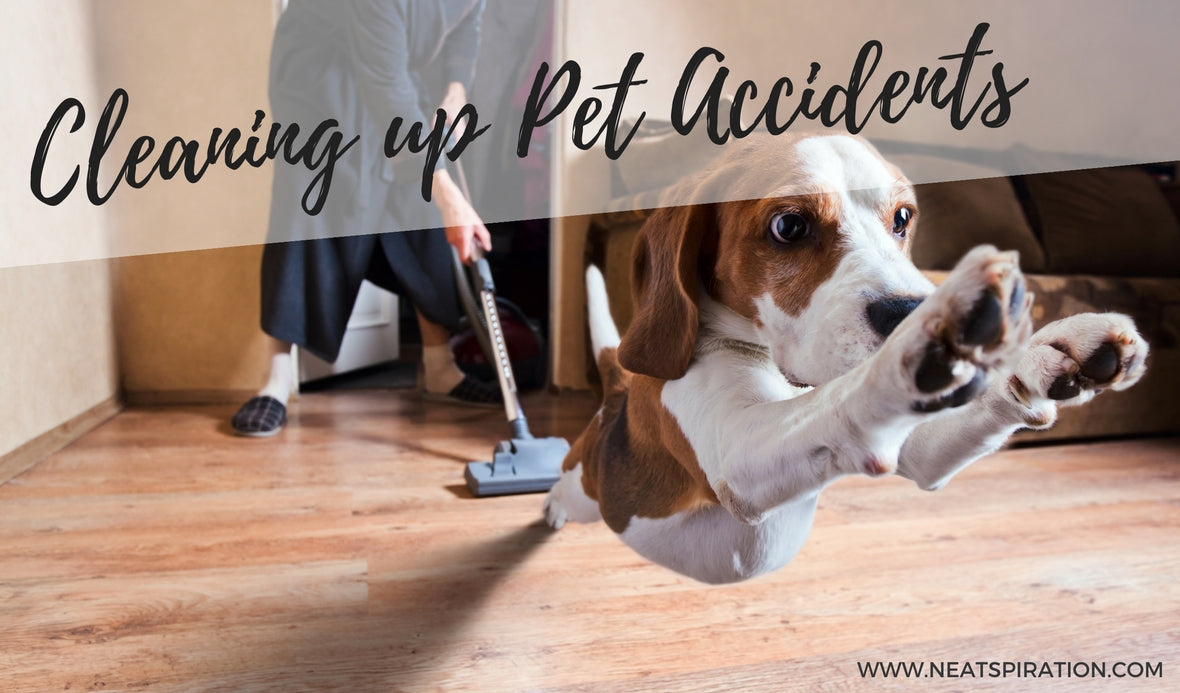 Cleaning up Pet Accidents