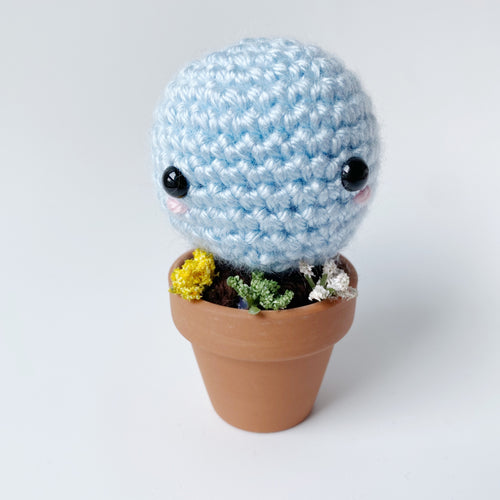 Squirtle Plant