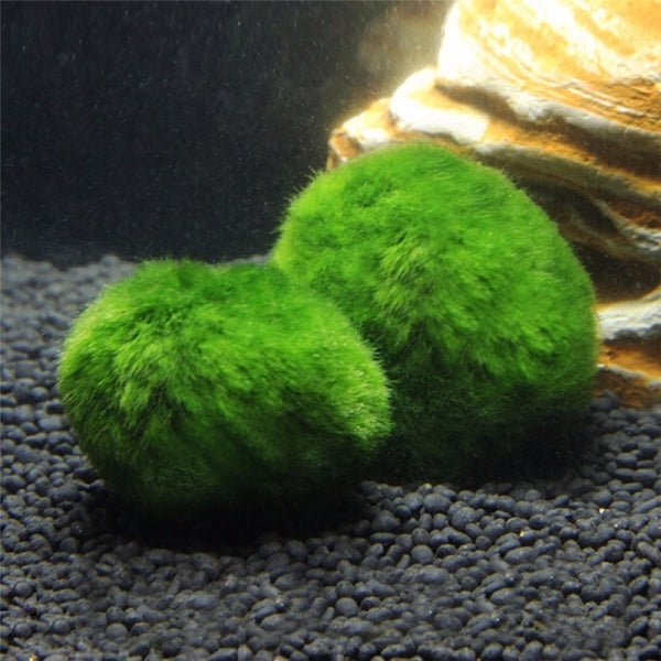3-4cm Cladophora Live Aquarium Plant Fish Tank Shrimp Nano For Marimo Moss Balls Fish Tank Ornament
