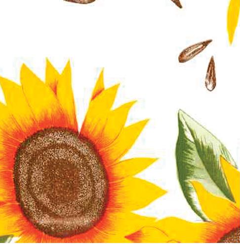 Sunflowers - White Background Oilcloth