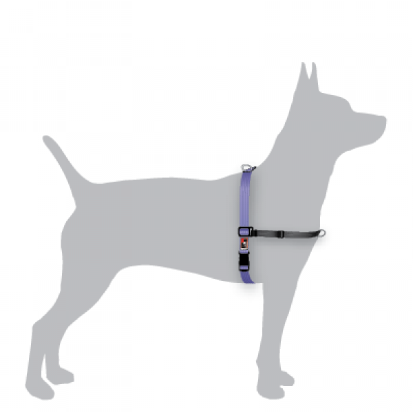 Black Dog Balance Harness