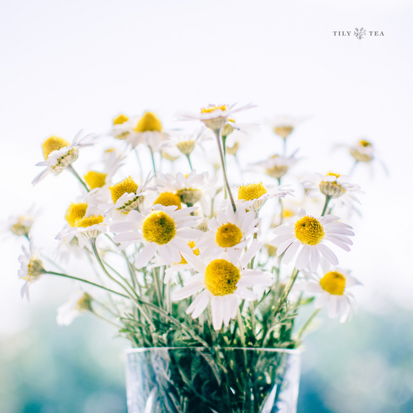 Getting to Know: Chamomile