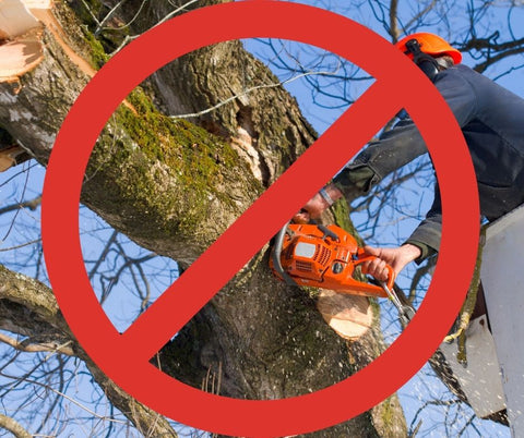 Vanishing Trees And How To Stop It