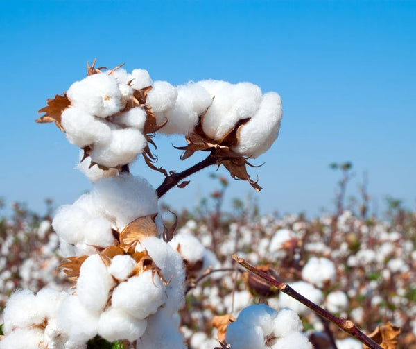 organic cotton Making Our Food System Better
