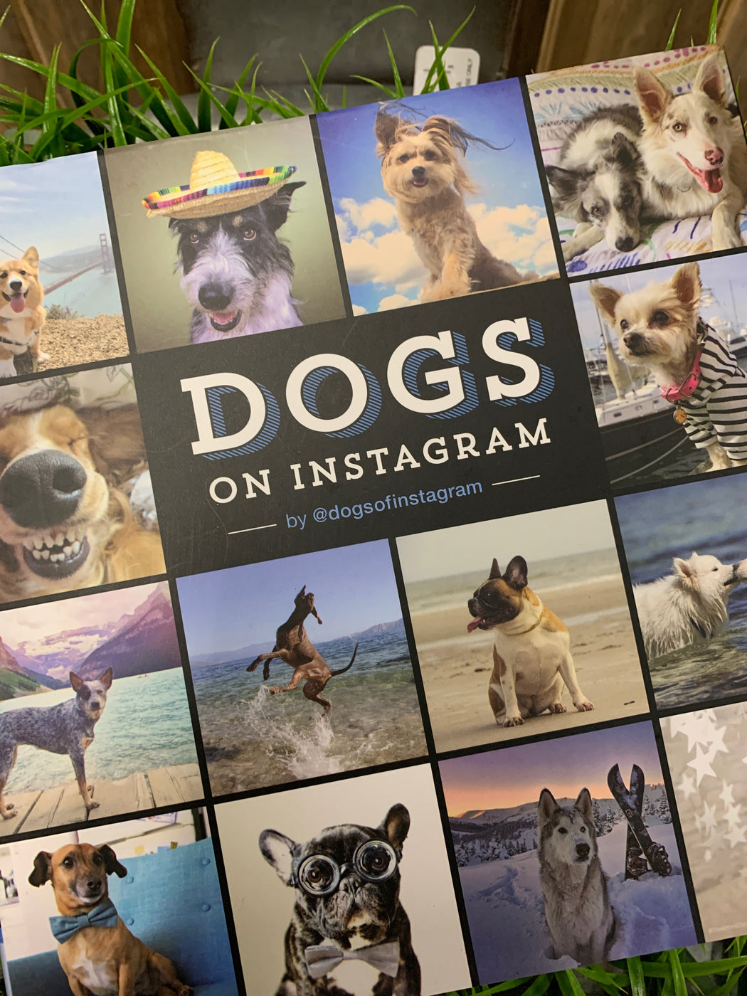 Dog lovers are a passionate bunch, and Instagram is the perfect platform for expressing their devotion. The curators behind @dogsofinstagram channel this passion perfectly in this delightful book, a must-have collection featuring over 400 of the best crowdsourced dog photographs from their wildly popular feed. For dog lovers by dog lovers, this eclectic compilation celebrates the full spectrum of things to love about our four-legged friends.