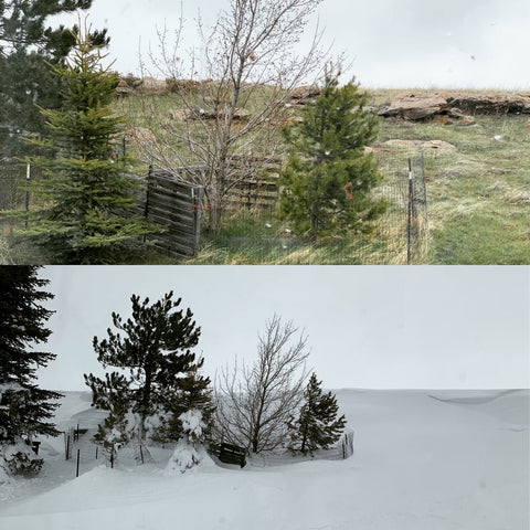before and after snow