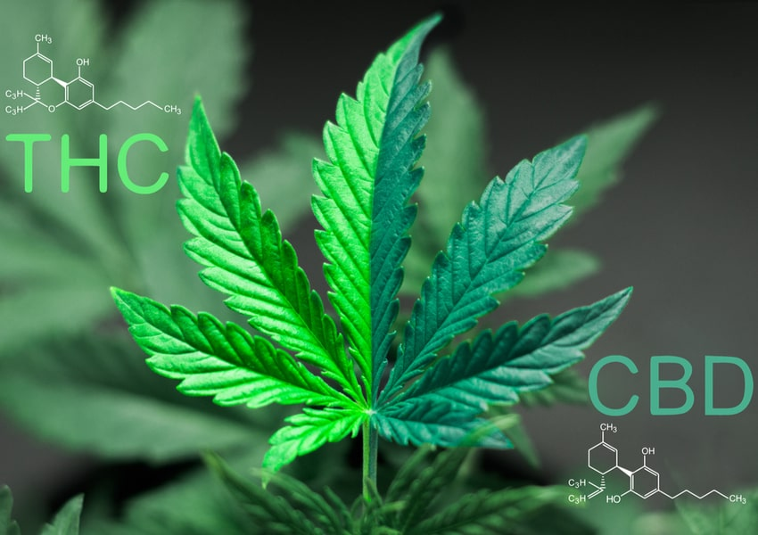 CBD vs THC - Know the Difference