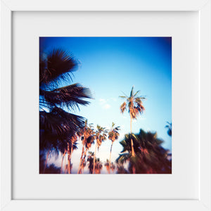 Cate Brown Photo Baja Palms #1  //  Film Photography Made to Order Ocean Fine Art