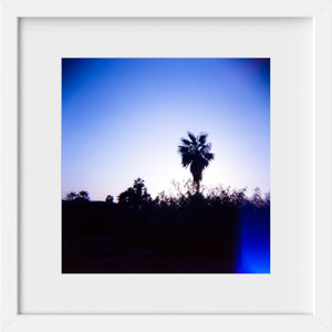 Cate Brown Photo Baja Palms #3  //  Film Photography Made to Order Ocean Fine Art