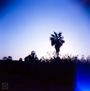 Baja Palms #3  //  Film Photography