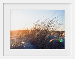 Beach Grass in Gold #1  //  Film Photography