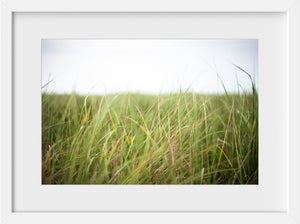Cate Brown Photo Beach Grass in the Wind  //  Landscape Photography Made to Order Ocean Fine Art