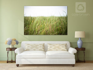 Beach Grass in the Wind  //  Landscape Photography