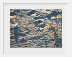Dogprints in the Sand  //  Film Photography