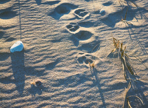 Cate Brown Photo Dogprints in the Sand  //  Film Photography Made to Order Ocean Fine Art