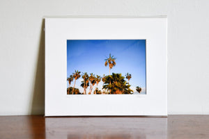 "Cate Brown Photo Baja Palms #2 // Matted Mini Print 8x10"" Available Inventory Ocean Fine Art"