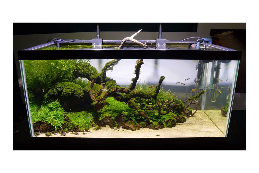 Aquatic Life Halo Deluxe Freshwater LED Aquarium Light Fixture Review by ADU Aquascaping