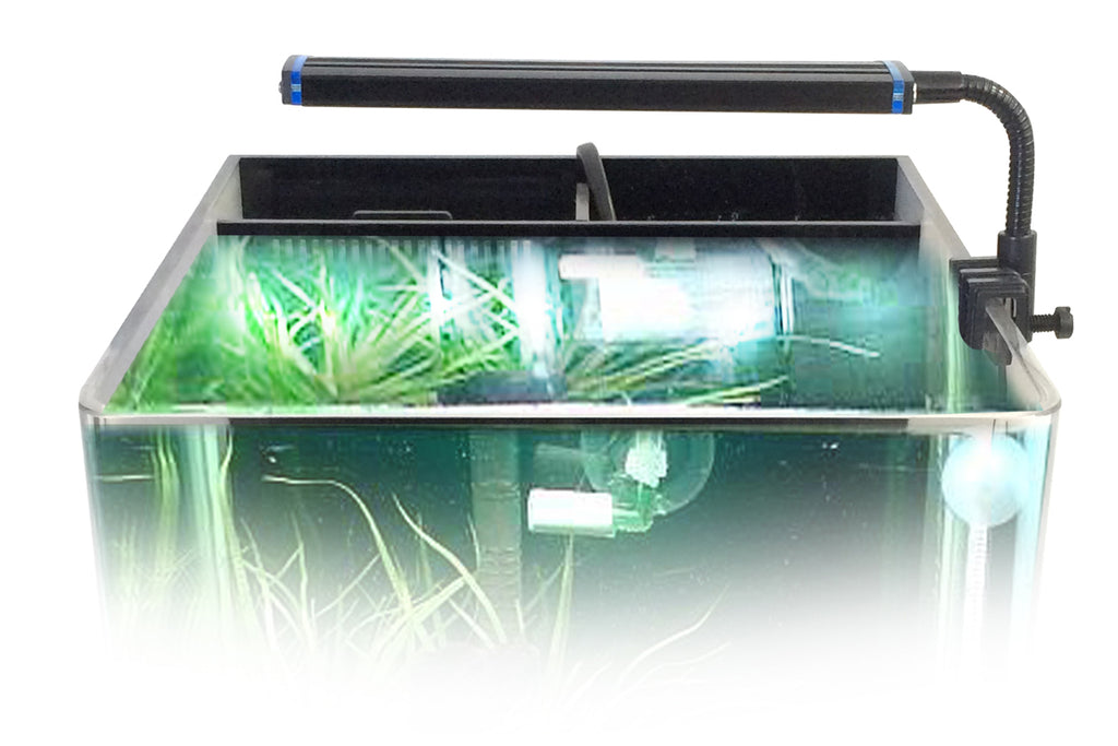 Lighting Considerations for Small Aquariums