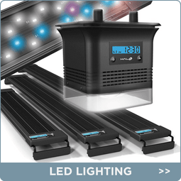 Aquarium Lighting & Accessories