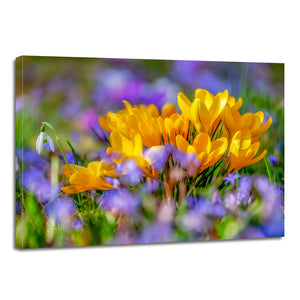 Crocus Flower Blossom Yellow Bloom Flora Canvas Prints Wall Art Home Decor - Canvas Print Sale