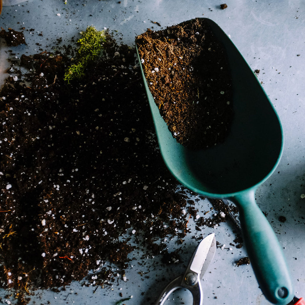 plant your garden properly this spring