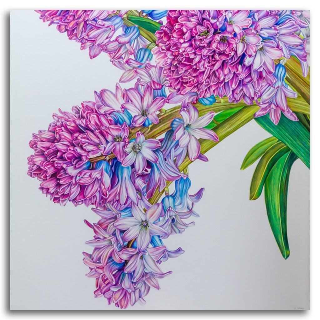 Hyacinth Coloured Pencil on Paper on Cradled Board by Jeannette Sirois
