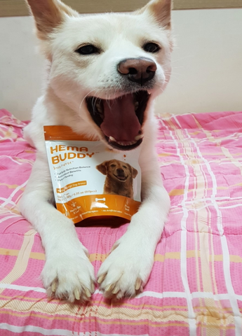 HemaBuddy™ Dog Health Supplement and Treat | Formulated by dog chefs and vets with best ingredients for dogs. Soft chews and complete nutrition supplement for dogs. Dog arthritis, dog joints, dog skin and coat supplements. hemabuddy hk