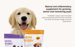 Natural anti-inflammatory supplement for growing, senior and recovering pups HemaBuddy™ contains unique human-grade health functional foods (HFF) from brown marine kelp that soothes and stimulates cartilage, muscle and epidermal cells.