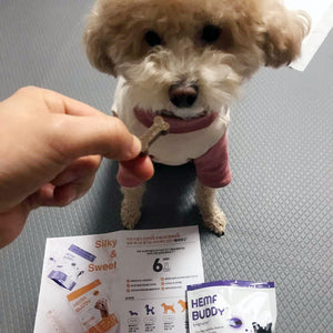 HemaBuddy™ Hong Kong Dog Health Supplement and Treat | dog joint supplement dog hip supplement dog skin coat supplement training treat pet nutrition old senior dog supplement dog uremia supplement best vet recommended dog supplement hemabuddy hk