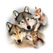 Load image into Gallery viewer, Wolf Harmony Heat Transfer