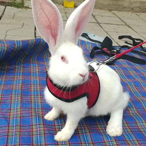 Mesh Dog Harness With Leash For Hamster Rabbits Bunny Animal Pets Pet Supplies