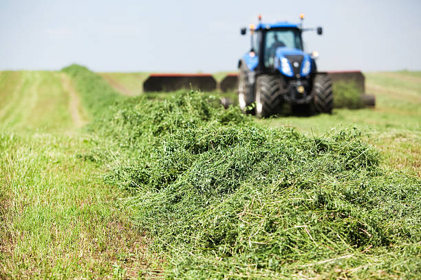 Is alfalfa good for horses with ulcers?