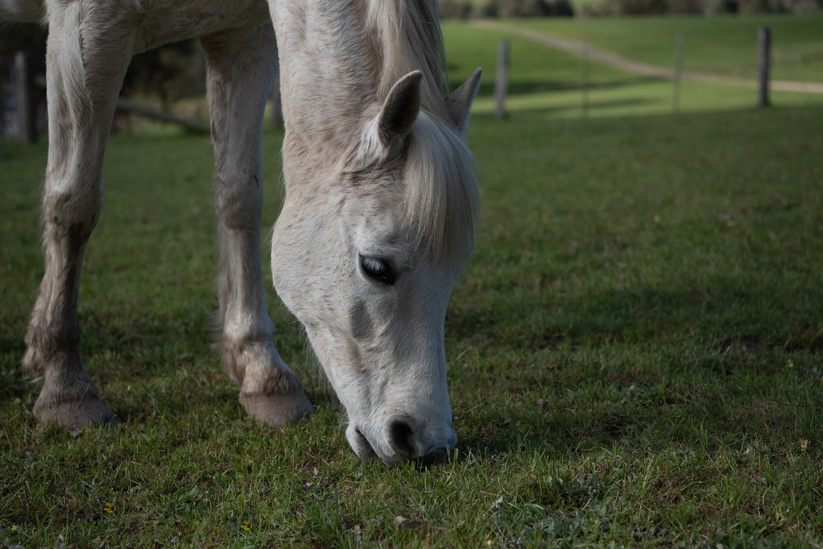 Review of antioxidants for horses: Astaxanthin