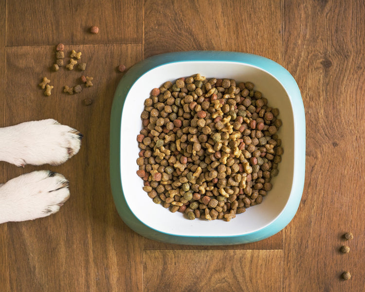 Does my dog need digestive enzymes?