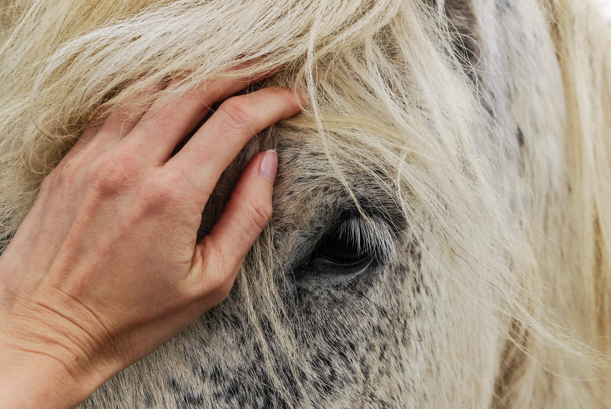 Equine Metabolic Syndrome: Can Probiotics Help?