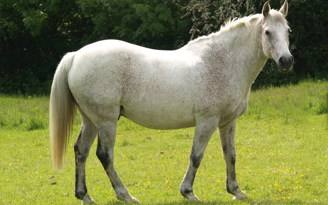 Is my horse too fat?