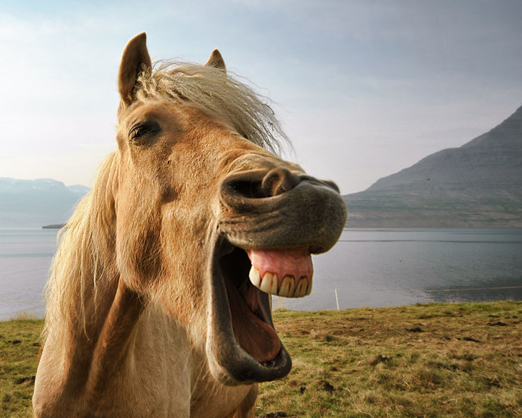 Equine Dental Health and Probiotics? The Surprising Connection