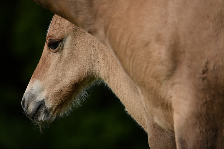 Set Up the Newborn Foal's Immune System for Success