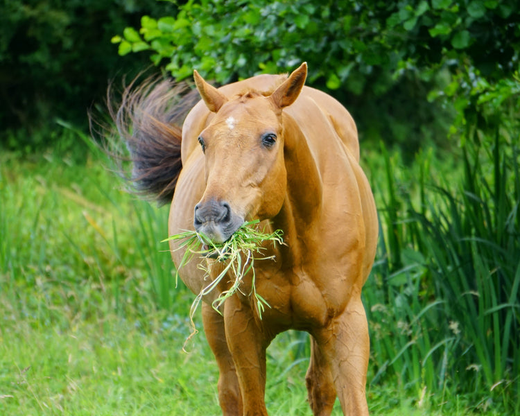 Overfeeding Broodmares: How do you know when it's too much?
