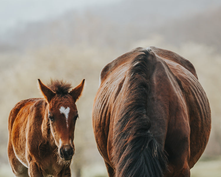 Failure of Passive Transfer in Foals