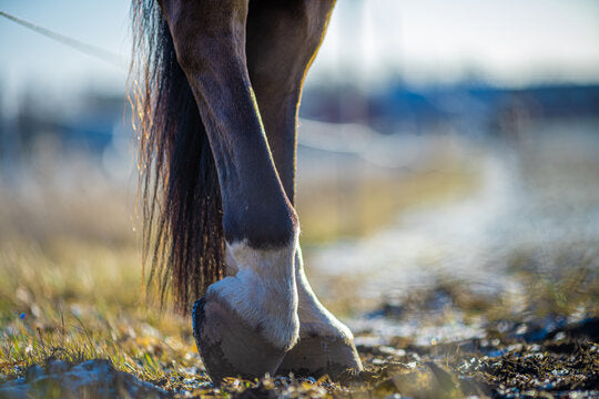Horse hoof care through every life stage