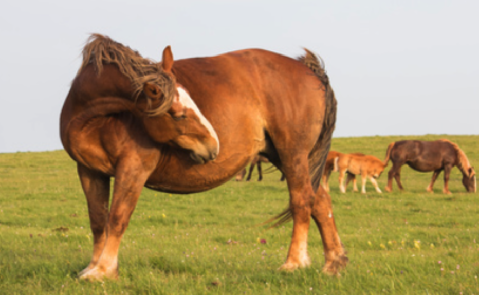 Your Horse's Poop Tells A Story