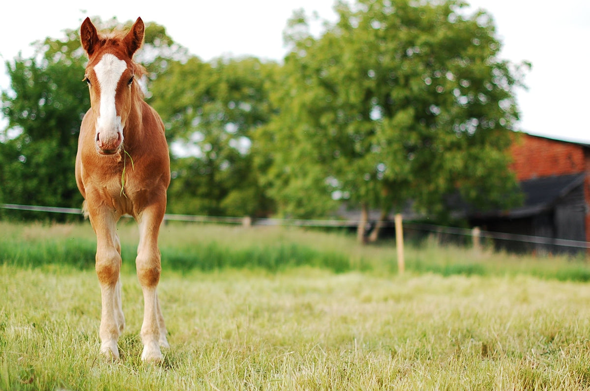 3 Tips for Keeping Broodmares Healthy
