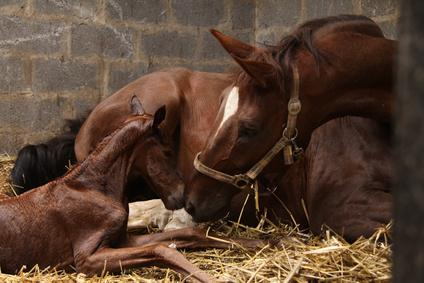 What a breeder couldn't see about his newborn baby horse that shocked him